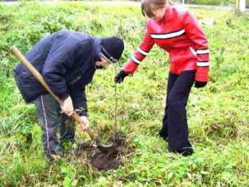 Горожане от мала до велика собрались возле лестницы на улице Воровского, чтобы посадить свое дерево.