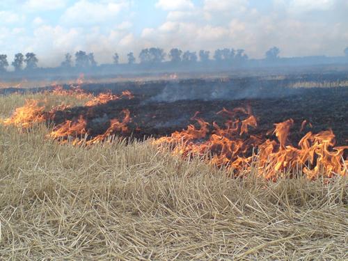 Октябрьский сельский район входит в тройку ведущих по количеству возгораний сухой растительности