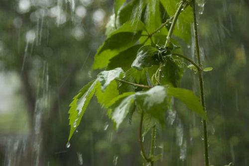 Погода может подпортить нам праздники