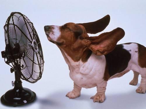 Восемь из десяти вентиляторов, продающихся на Дону, не соответствуют нормам безопасности