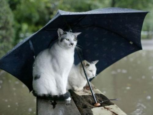В ближайшие дни в Шахтах аномалий погоды не ожидается