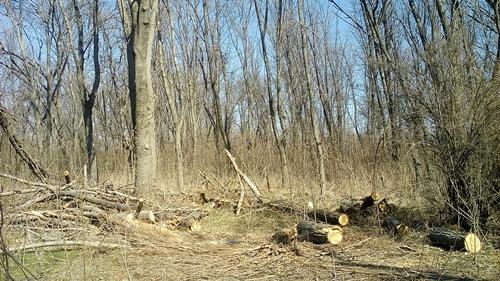 В бывшем парке ТЭЦ вырубают деревья