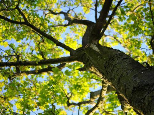 Посади дерево!