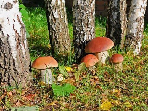 Зафиксированы случаи отравления грибами