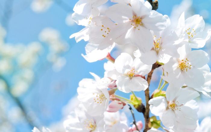 Настоящая весна ожидается в ближайшие дни!