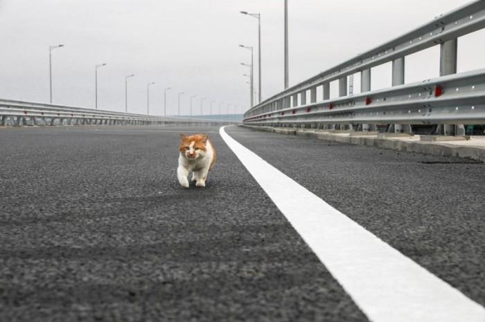Мост в Крым сдан. ВИДЕО