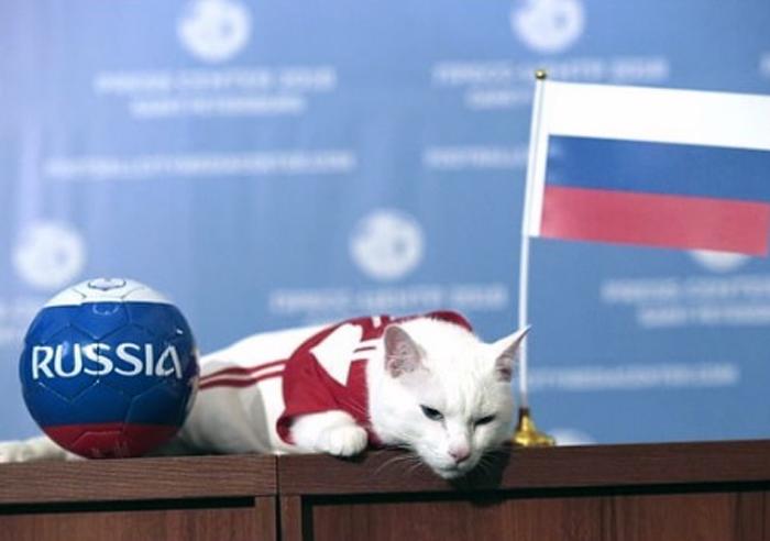 Питерский кот-предсказатель предрек победу России над Египтом