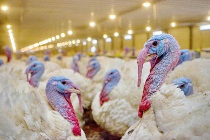 """На """"Евродоне"""" отрицают очередную вспышку птичьего гриппа"""