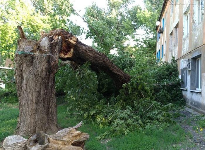 В поселке ГРЭС на жилой дом рухнуло огромное дерево