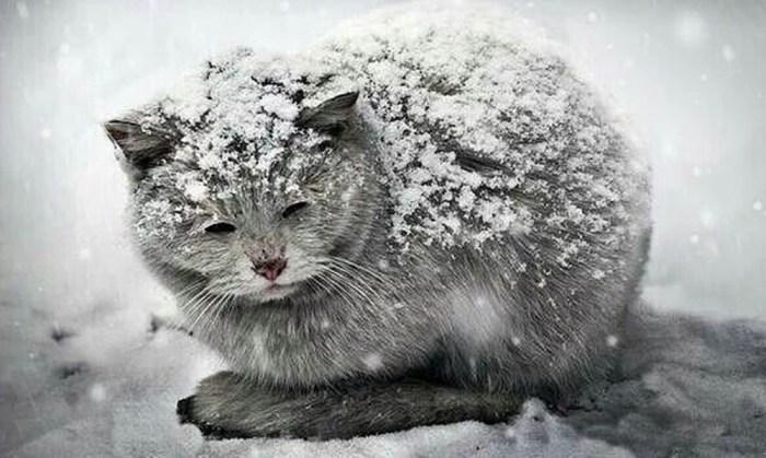 Сильные морозы ударят к весне. В Гидрометцентре пообещали россиянам тёплую зиму