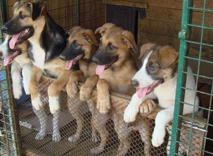 В декабре будут организованы дни льготной стерилизации кошек и собак