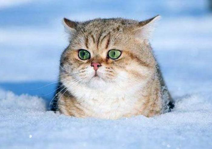 Снег и небольшой минус обещают синоптики на будущей неделе