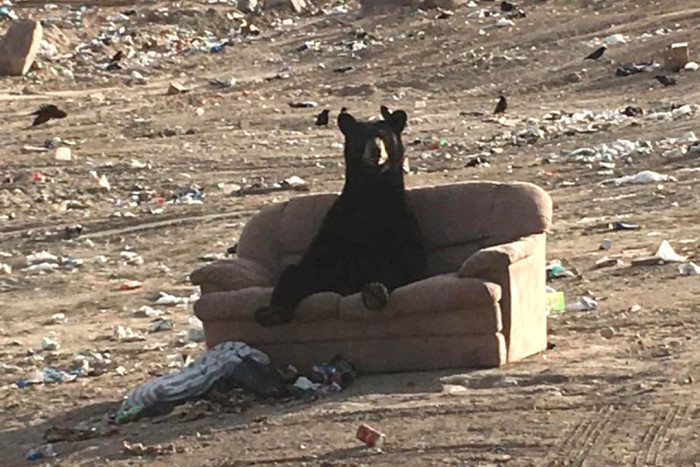 """Нормативы накопления мусора назвали """"бредом"""""""