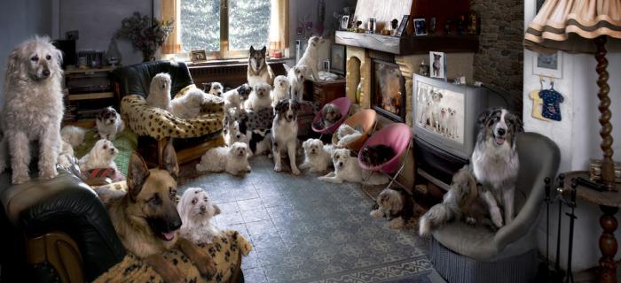 Минстрой и Правительство могут запретить дома лишних животных