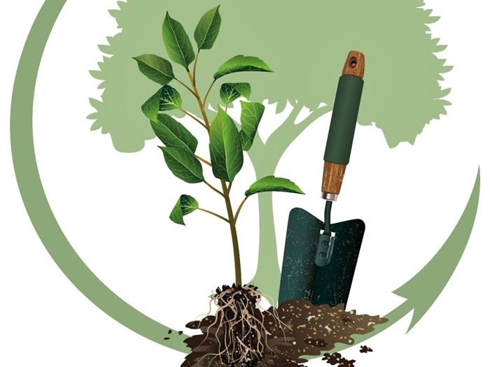 Завтра в Шахтах будут сажать деревья